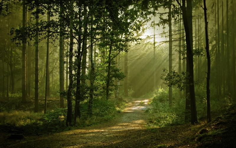 forêt écologie